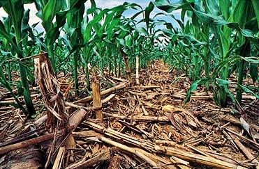 manure-agri-residues